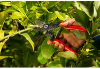 Complete secateurs