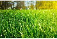 Gazon/Gras